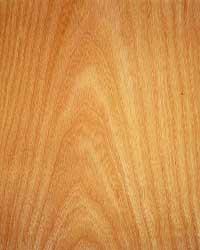 Holzarten Erkennen holzkunde